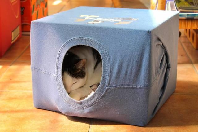 Как понять что кошка скоро родит - признаки родов