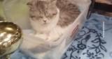 Ампициллин для кошек: инструкция по применению