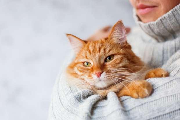 Можно ли кошкам свеклу - плюсы и минусы