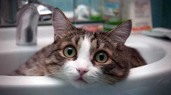 Как отучить кота гадить в неположенном месте - практические советы
