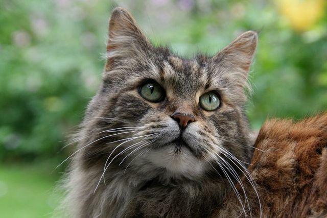 Глюкоза для кошки: инструкция по применению