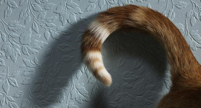 5 причин почему у кошки сальный хвост - как лечить