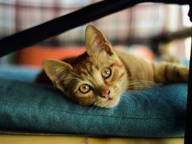 Жировик у кошки на животе: причины и что делать