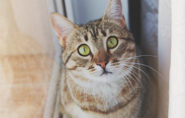 Как сбить температуру кошке в домашних условиях самому