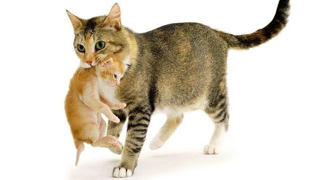 Холка у кошки - где она находится