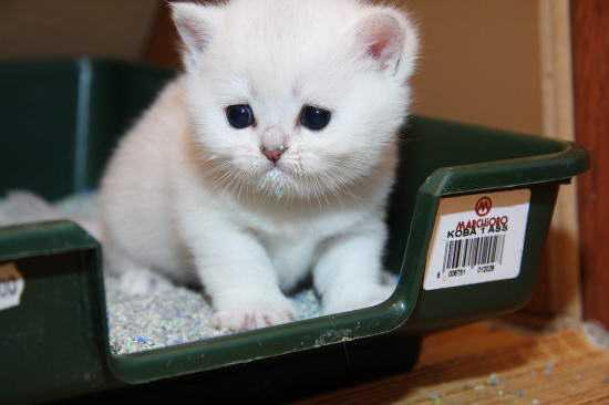 Прикорм котят: с какого возраста можно начинать