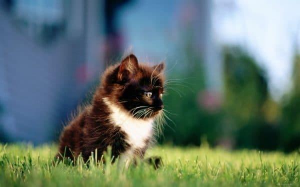5 рекомендаций как заставить котенка сходить в туалет