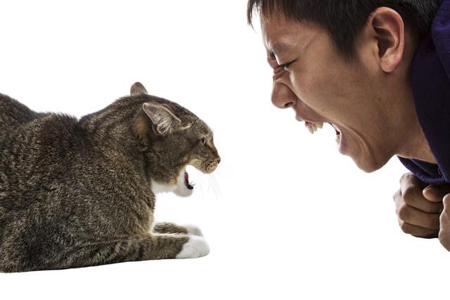 Почему кошка нападает на хозяина - методы борьбы с агрессией