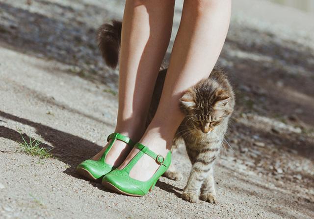 4 причины, почему кот топчется передними лапами
