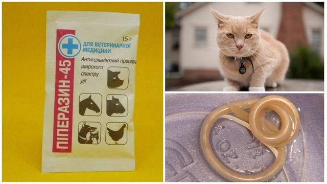 Пиперазин для кошек: инструкция по применению