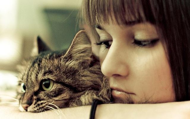 Кошка не любит когда ее гладят - причины и что делать
