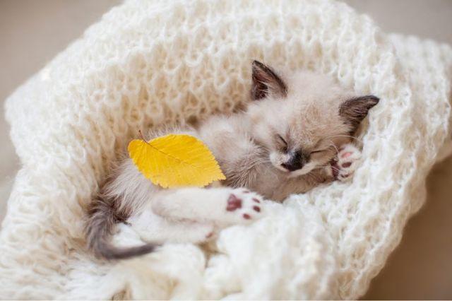 Как приучить котенка спать на своем месте