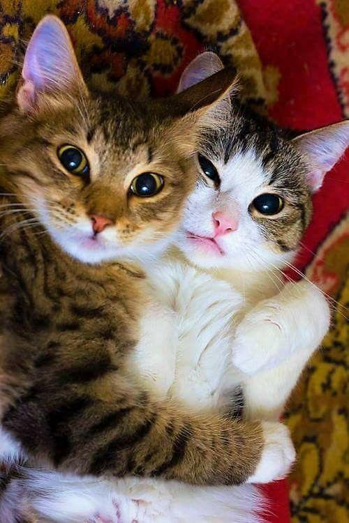 Почему кошка дергает хвостом - причины и значение
