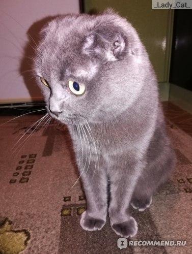 Траумель для кошек: инструкция по применению