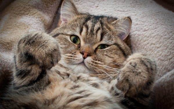 6 причин, почему кот не хочет кошку