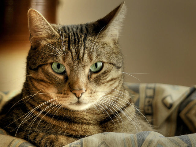 6 симптомов дисбактериоза у кошек - как лечить
