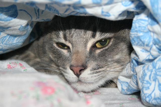8 симптомов гепатита у кошек - лечение и диагностика