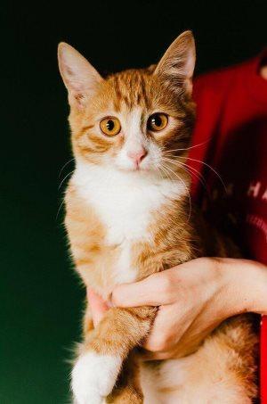 Метипред для кошек - инструкция по применению, дозировка