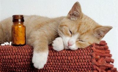 Симптомы отравления у кошек - признаки заболевания