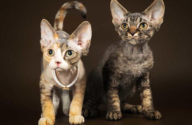 Как определить возраст котенка по зубам