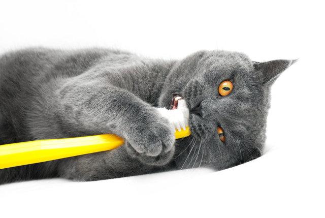 Выпадают ли молочные зубы у котят