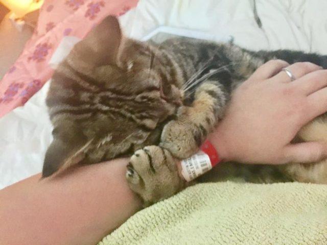 Почему нельзя обнимать котов - причины и последствия
