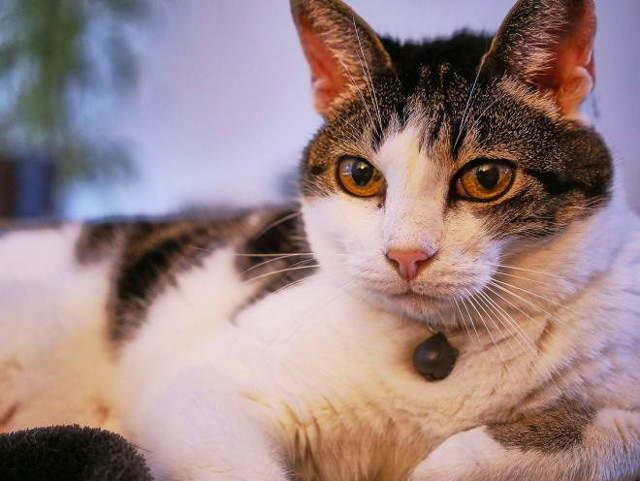 8 причин бронхита у кошек - симптомы, лечение, профилактика
