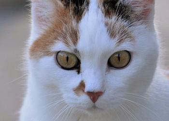 13 симптомов опухоли во рту у кошки - как лечить