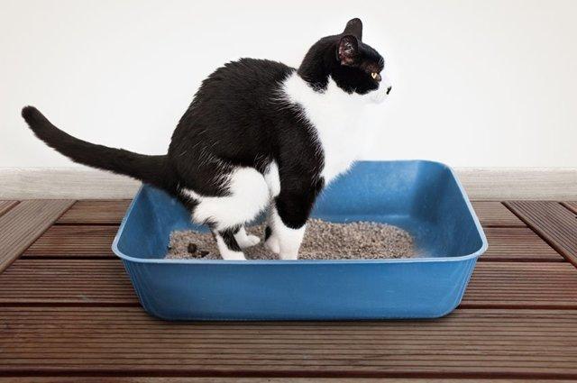 Как правильно сделать клизму коту в домашних условиях