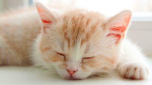 У кошки дергается спина - причины и что делать