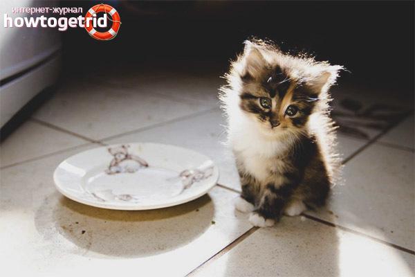 Чем кормить котенка при поносе - правильное кормление