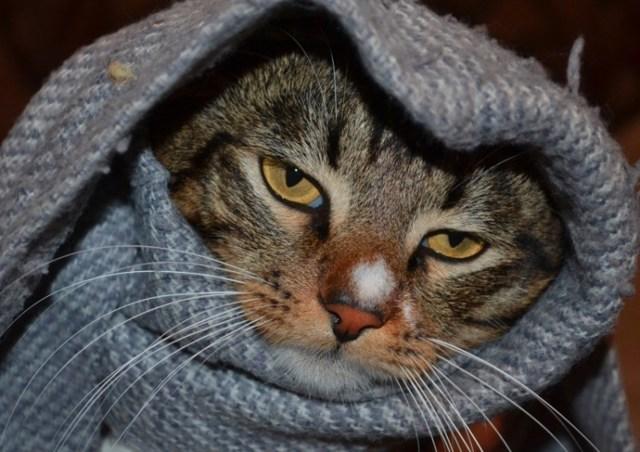 Кошка тяжело дышит и хрипит - причины, симптомы, лечение