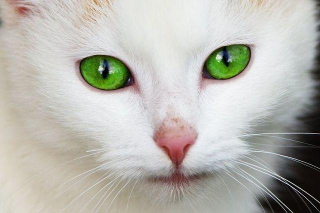 У кошки холодный нос - что делать?