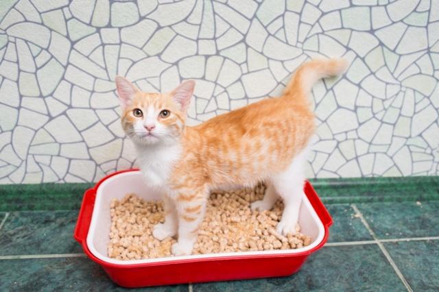 Как приучить котенка к лотку - быстро и без нервов