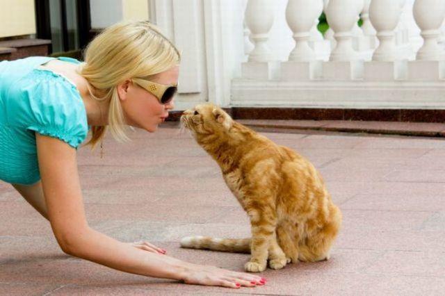 4 причины почему у кошки кровоточат десны - симптомы и лечение
