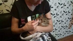 Омез для кошки - инструкция по применению, дозировка
