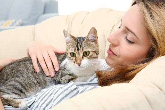 Кошка ложится на живот беременной - причины