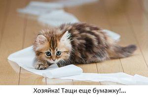 Чем и как лечить понос у кота - причины и профилактика