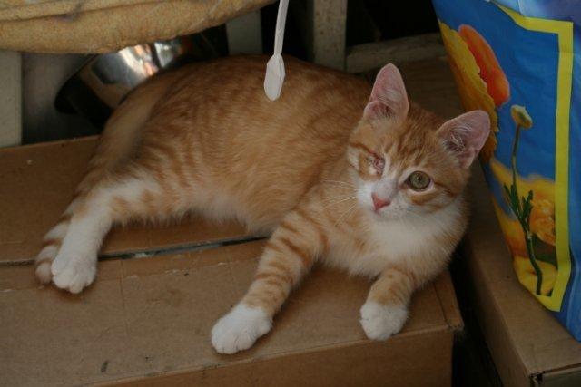 Противогрибковый шампунь для кошек - показания к применению