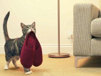 Любят ли кошки своих хозяев - признаки любви