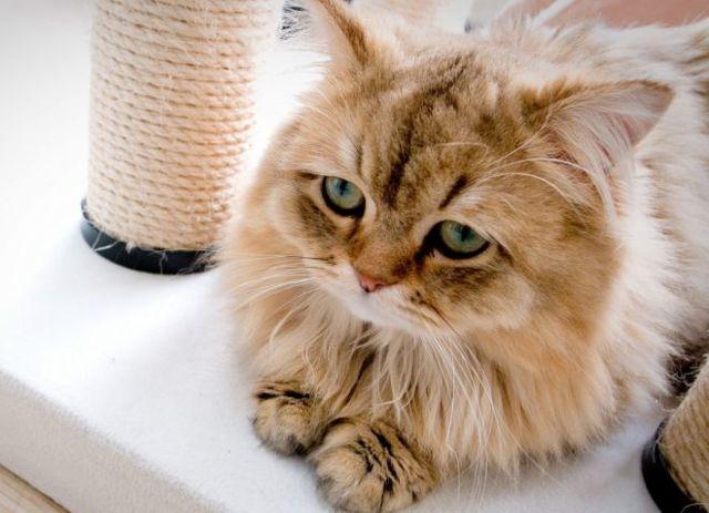 Круглые глисты у кошек - признаки и лечение