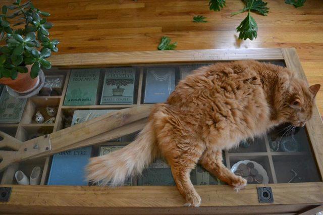 Как отучить кошку лазить по столам - 3 совета как это сделать