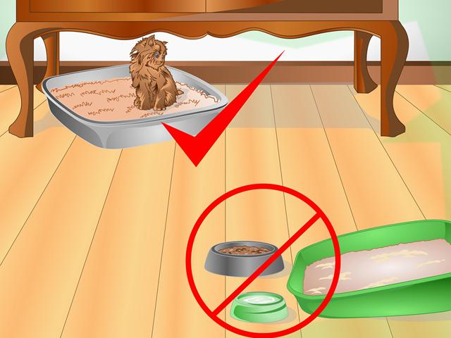 Как отучить котенка писать на кровать - способы отучения