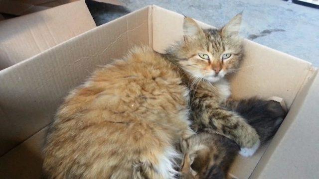 Кот лижет пакеты: причины и как отучить
