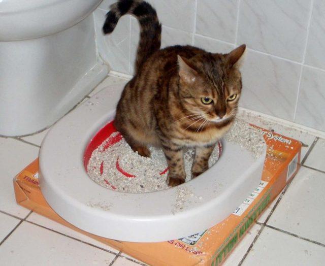 Сколько раз должна ходить в туалет кошка