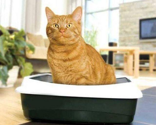 Как избавиться от запаха кота в квартире - 3 метода
