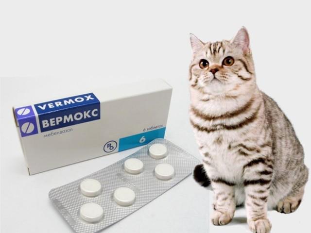Вермокс для кошки: инструкция по применению