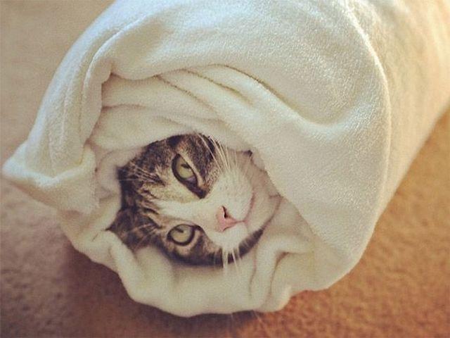 Кот чихает и слезятся глаза чем лечить в домашних условиях - лекарства