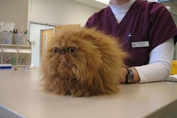 Лишай у котенка - как выглядит и чем лечить