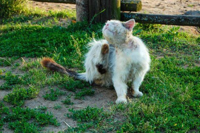 У кота перхоть и лезет шерсть - что делать